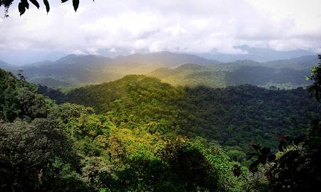La forêt d'EBO au centre des batailles