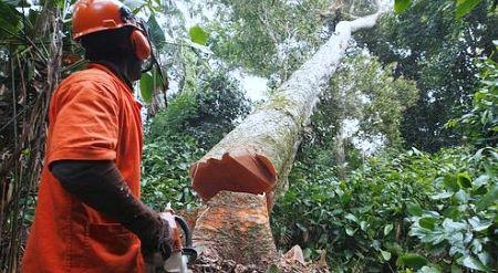Une forêt tropicale au Cameroun (image d'illlustration)