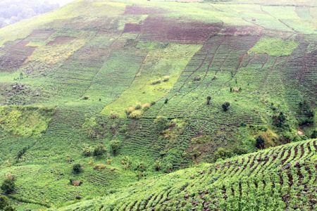 Des chiffres de la présence chinoise sur des terres agricoles en Afrique font débat au Cameroun