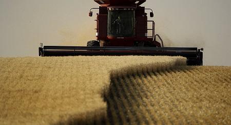 La France craint l'arrivée du blé russe en Algérie, alors qu'elle a fourni plus de 50% des besoins du pays en 2018 © AP Photo /