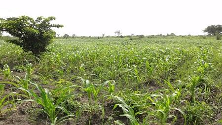 Le niveau du développement dépend en grande partie du nombre de sillons agricoles creusés